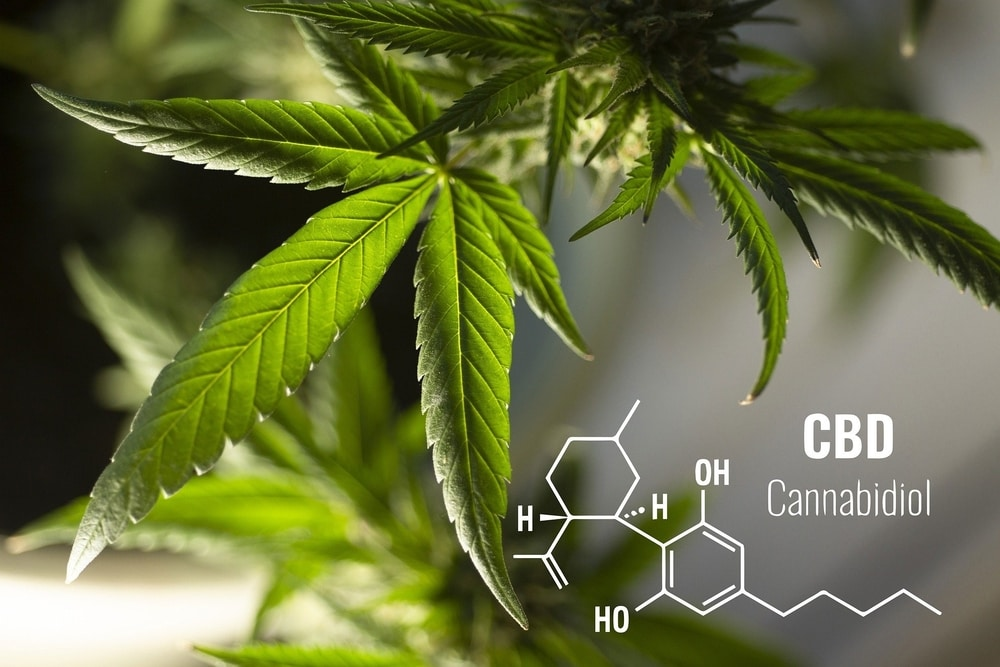 Cannabidiol molecular compound with hemp leaves in the background